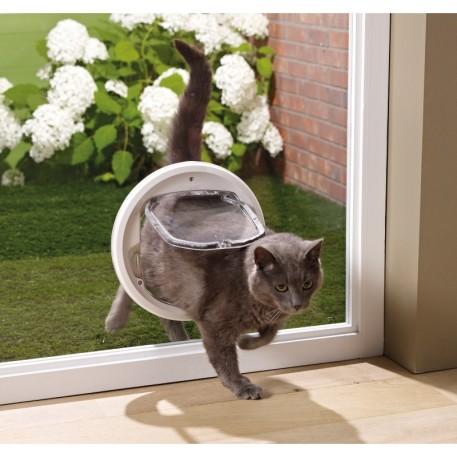 forare il vetro per gattaiola