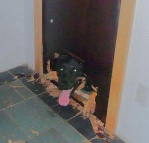 Bucare il vetro per i cani e i gatti vetraria gelfi bergamo - Porta basculante per cani grandi con microchip ...