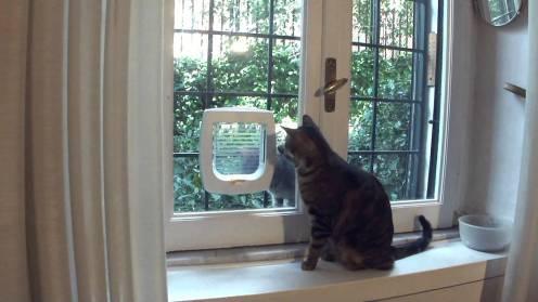vetro con porta per gatti
