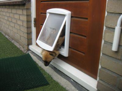 gattaiola-per-cani-grossi