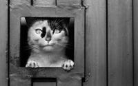 bucare il vetro per la gattaiola